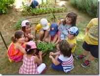 επίσκεψη στο λαχανόκηπο (1)
