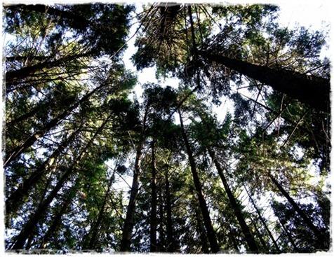8 skogen