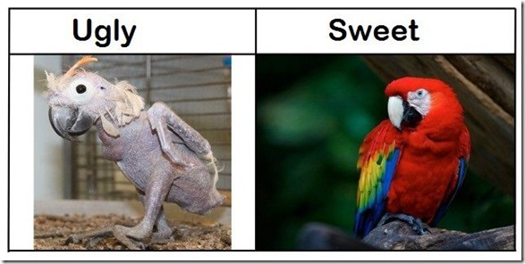 ugly-vs-sweet-2