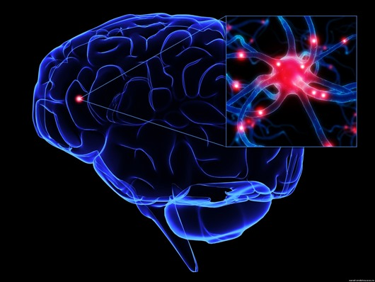 neurons51-1-