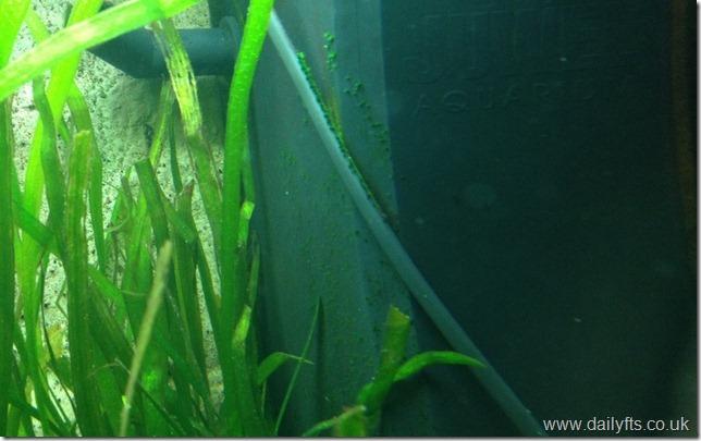 Juwel Lido 120 Algae.31