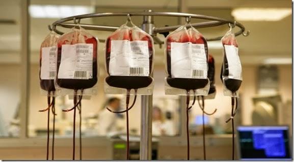 sacche-sangue