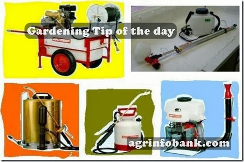 Gardening tip of the day Salma Kamal 5th