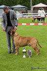 20100513-Bullmastiff-Clubmatch_31184.jpg