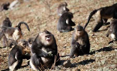 poblacion monos aulladores
