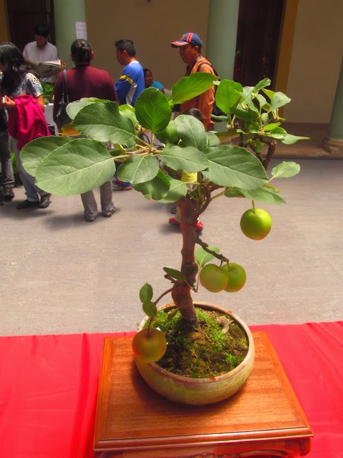 Bonsai tree exhibition