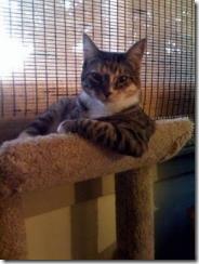 posing cat