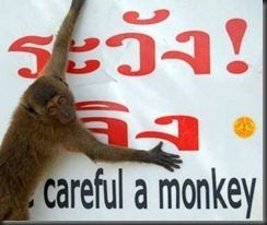201010-w-funnysigns-monkey_thumb