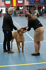 20130510-Bullmastiff-Worldcup-0322.jpg