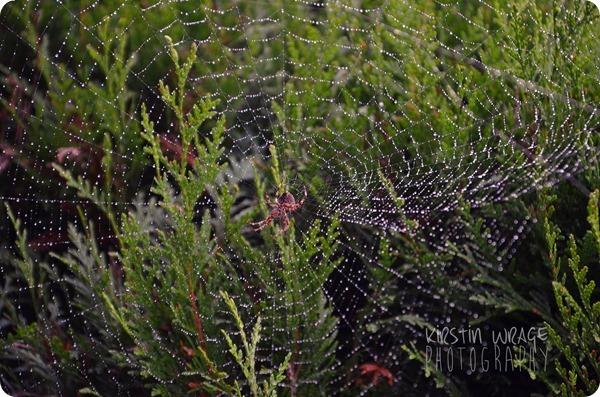 Regentropfenspinnennetz