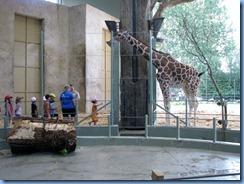 0258 Alberta Calgary - Calgary Zoo Destination Africa - African Savannah - Giraffe
