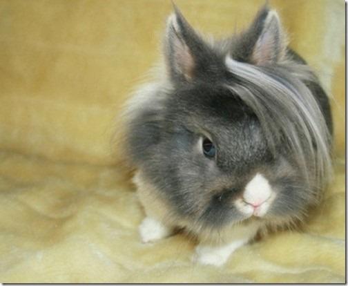 awesome-animal-haircuts5