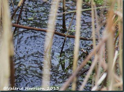 27-frogspawn