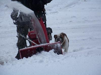 Cujo and Dad - Snowblowing Driveway4