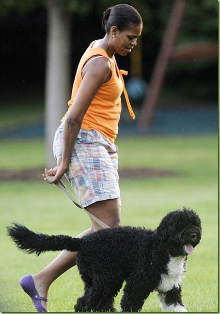 MO doggy