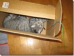 uusi laatikko