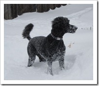 20120113_snow-day-outside_024