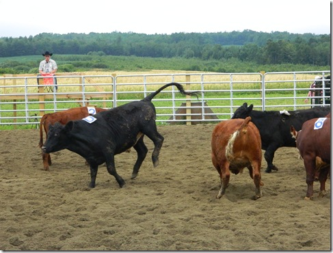 Team Penning 2011 146