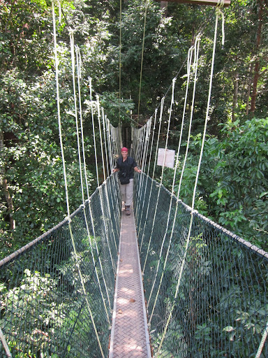 Crossing one of the long suspended canopies in Taman Negara.