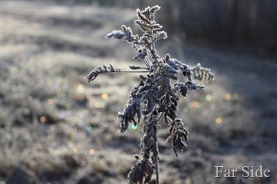 Frosty Sparkles
