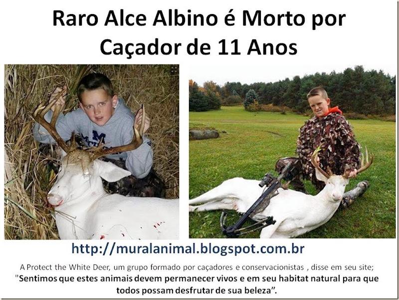 Raro Alce Albino é Morto por