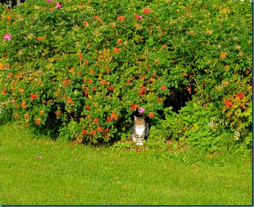 kissa myllykoski kärpänen 003