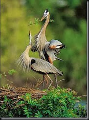 birds nestamor