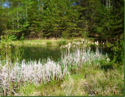 GMF pond