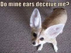 ears deceive