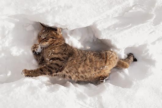 cat-snow-3