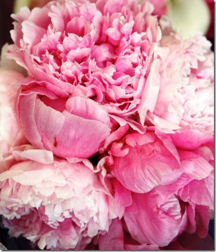 peonies via pinterest 1