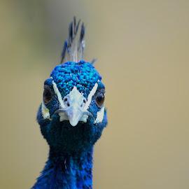 by Rob Kovacs - Novices Only Wildlife
