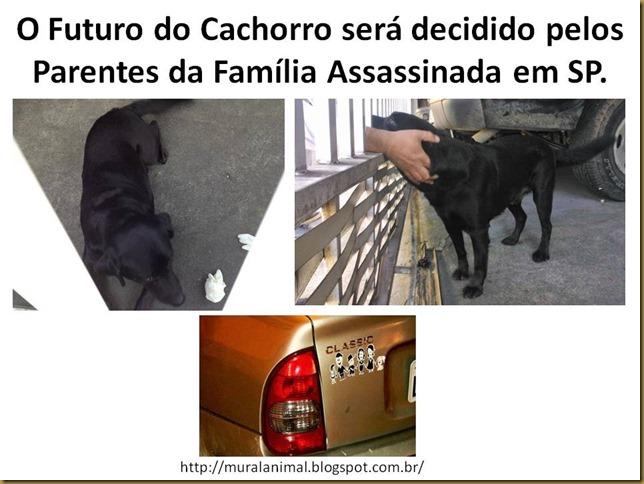 cao_brasilandia
