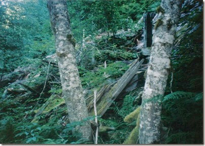 Collapsed Snowshed Ruins along the Iron Goat Trail near Martin Creek in 1998