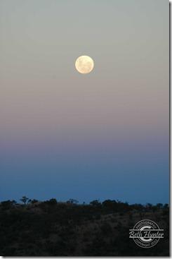 _nearly-full-moon