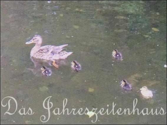 tiergarten 12