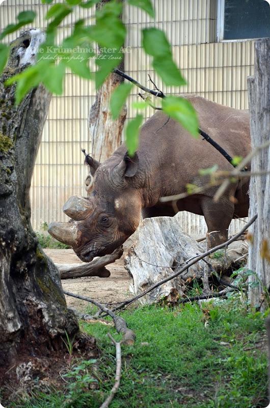 Zoo Frankfurt Spitzmaulnashorn 150813