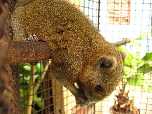 Зоопарк (Phuket Zoo)
