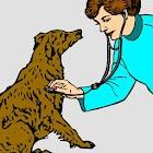 Veterinary Glossary icon