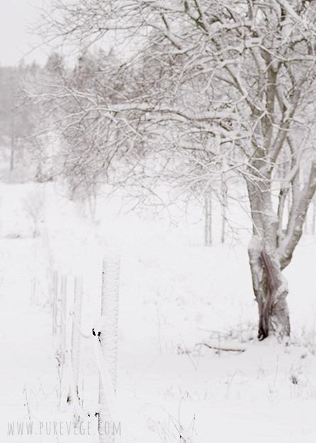 2-winter