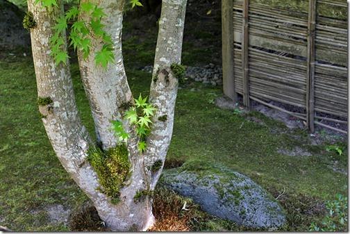 100726_Portland_Japanese_Garden_098