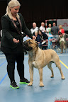 20130510-Bullmastiff-Worldcup-0360.jpg