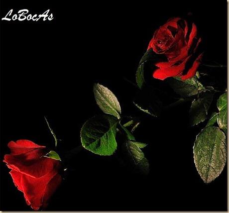 rosaroja-LoBocAs10