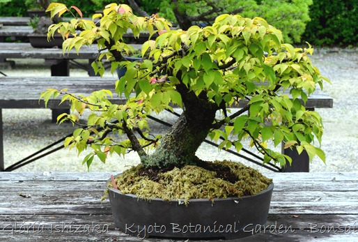 Glória Ishizaka -   Kyoto Botanical Garden 2012 - 41