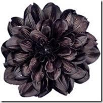 s-black-dahlia