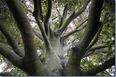 albero della vita metodo