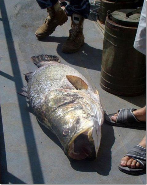 big-fish-fishing-7