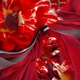 RED & WHITE by Carmen Velcic - Digital Art Abstract ( abstract, red, white, roses, flowers, digital, curves )