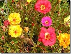včely na květech 092