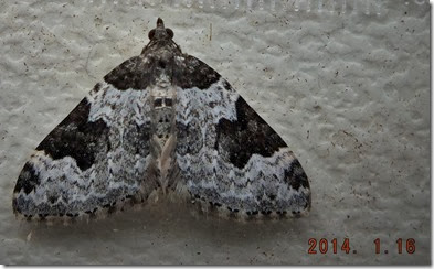 1728 Garden carpet 15 Jan 2014
